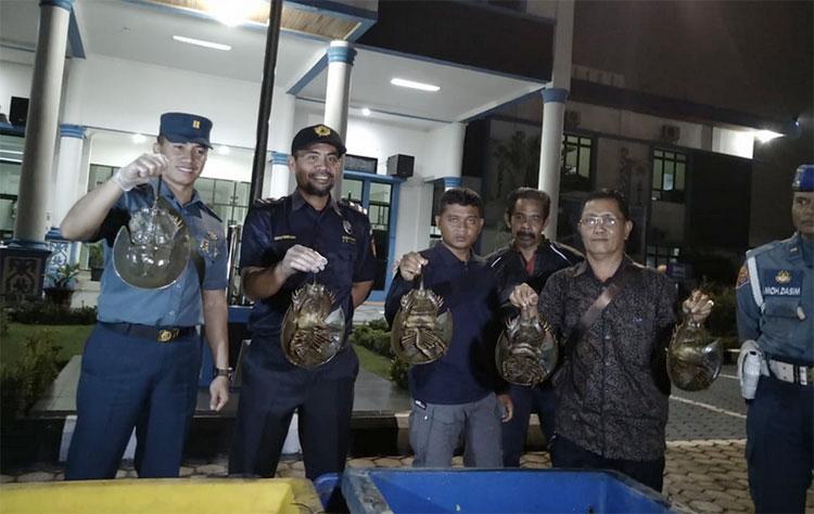 Termasuk Hewan Purba, Belangkas Bakal Diselundupkan ke Malaysia