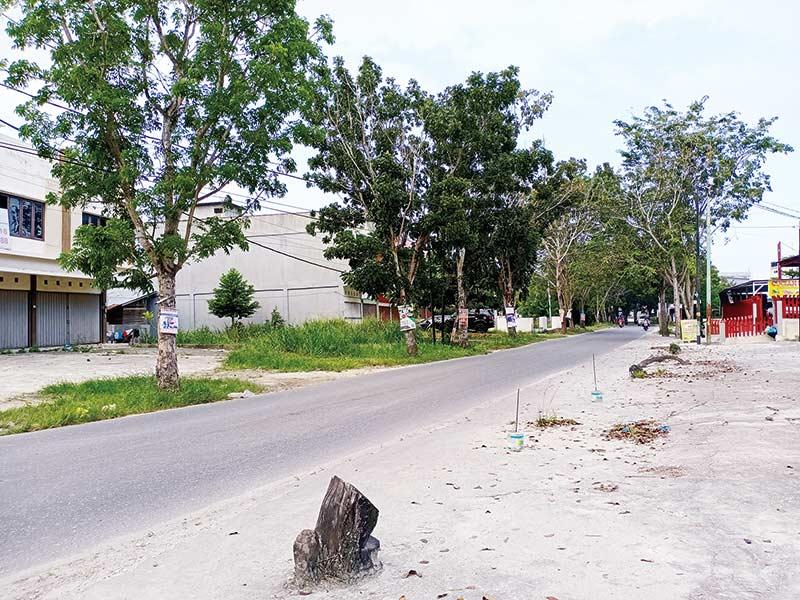 Tebang Pohon Pelindung Terancam Didenda