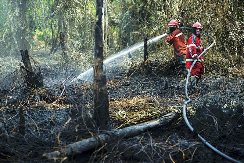 Kaleidoskop Kebakaran Hutan dan Lahan di Riau