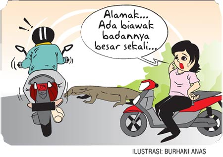 Ngebut vs Biawak