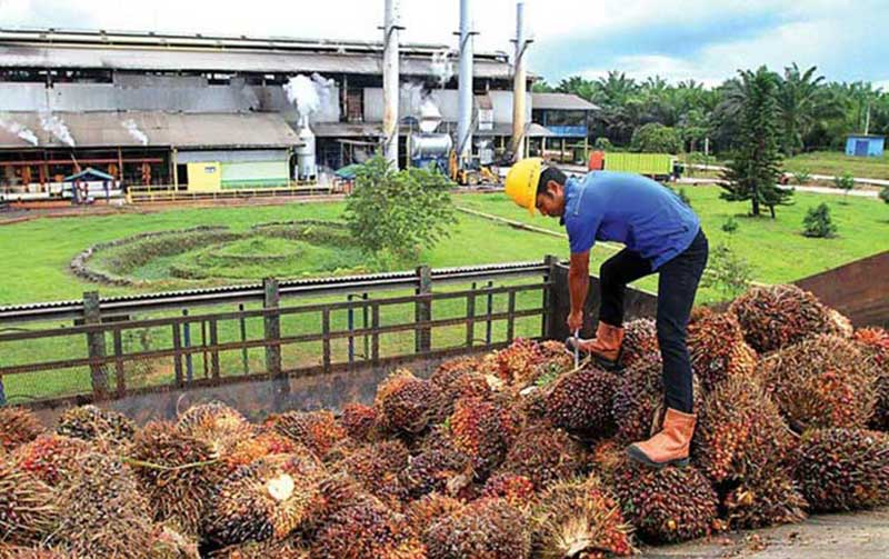 Produsen Sawit Indonesia Doakan Ekonomi Cina Cepat Pulih