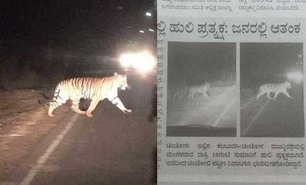 Foto Harimau Dumai Ternyata Palsu
