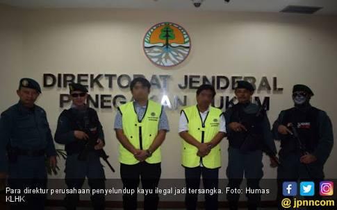Tiga Direktur Pemilik Kayu Ilegal di Jayapura Jadi Tersangka