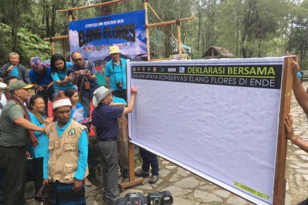 KLHK Rencanakan Konservasi Elang Flores