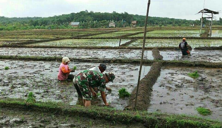 TNI AD Tanam Padi Hingga Bersihkan Jalan Desa di Riau