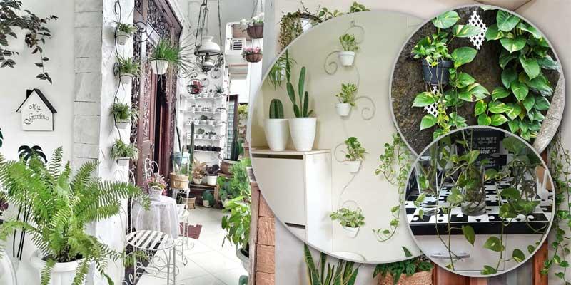 Percantik Rumah dengan Tumbuhan Bermanfaat