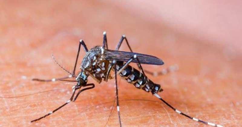 5 Jenis Makanan ini Bisa Mencegah dari Gigitan Nyamuk