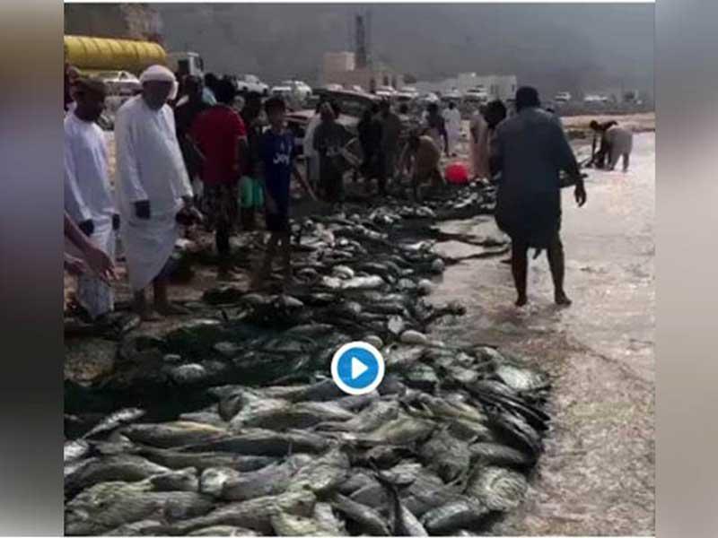 Heboh, Ribuan Ikan Mendatangi Pantai di Gaza, Aslinya Terbawa Badai Mekunu di Oman