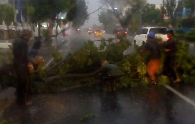 Diguyur Hujan Lebat, Banyak Pohon Tumbang, Ini Foto-fotonya
