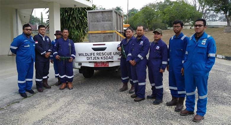 Harimau Sumatera Berkeliaran di Area PT Chevron