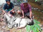 Warga Kampar Kiri Diamuk Beruang, di Siak Buaya Masuk Kampung