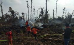 4 Hektare Lahan Areal Arara Abadi Terbakar Berhasil Dipadamkan