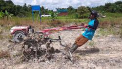Pandemi, Warga Sakai Bertanam Holtikultura