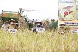 Akui Pernah Jadi Penghasil Beras di Wilayah Riau