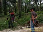 BKSDA: Viral Jejak Harimau di Bengkalis Tak Benar