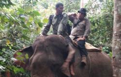 Penggiringan 4 Gajah Liar Dekati TNTN