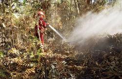 Sejak Januari, Sudah 65 Ha Lahan Terbakar