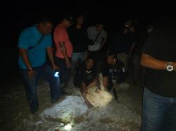 Akhirnya Pelaku Pembacokan Ditangkap di Tanjung Pauh