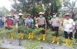 Setelah Launching, Polsek Kuantan Mudik Bantu Petani di Kasang