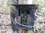 BKSDA Tambah Kamera Pengintai Harimau