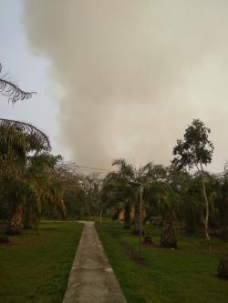Warga Antar Pohon Sawit ke DPRD