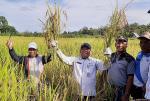 Dorong Petani Tingkatkan Hasil Produksi Pangan di Rokan Hulu