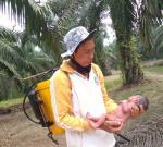 Siak Geger, Bayi Perempuan Ditemukan di Kebun Sawit