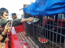 Beruang Madu Dievakuasi ke Klinik Satwa BBKSDA