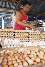 Harga Telur Rp45 Ribu per Papan