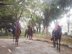 Wisata Berkuda di MasjidWisata Berkuda di Masjid Raya An-Nur Raya An-Nur