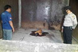 Nahas, Pencuri Sarang Burung Walet Tewas Terjatuh dari Lantai 4