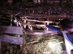 Teluk Lanus, Kampung Habitat Buaya Kini Diteror Harimau