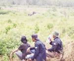 Kawanan Gajah Berkeliaran di Sekitar Kebun Warga