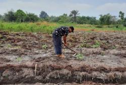 Alih Fungsi Lahan Ancam Sektor Pertanian, Ini Pesan MPR ke Pemerintah