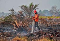 41 Hotspot Tersebar di Riau, Terbanyak di Kabupaten Pelalawan