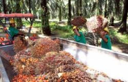 Ini Kata Kemendag soal Uni Eropa Permasalahkan Produk Sawit Indonesia