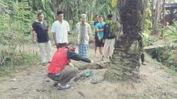 Mayat Ibu Muda Ditemukan Hangus di Pohon Sawit