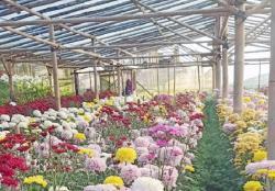 Bazar Bunga, Inisiatif Redam Lesunya Penjualan