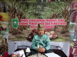 Terus Naik, Harga TBS Kelapa Sawit di Riau Jadi Rp2.762 per Kg