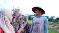 Di Tengah Pandemi, Petani Sayur Mendapat Untung