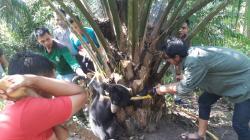 Terjerat Tali Nilon, BBKSDA Riau Berhasil Evakuasi Anak Beruang Madu