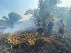 10 Hektare Lahan di Sungai Segajah Jaya Terbakar