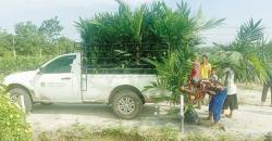 3.200 Petani Borong 708.277 Bibit Sawit Unggul PTPN V