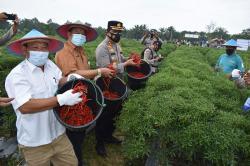 Kampung Tangguh Polres Inhu Sudah Hasilkan Tujuh Ton Cabai Merah