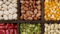 Konsumsi Kacang-Kacangan Mampu Stabilkan Gula Darah