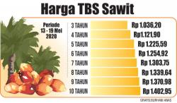 Produksi Meningkat, Harga Sawit Riau Turun