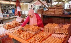 Harga Telur Ayam Kembali Naik