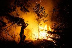 BMKG Peringatkan Riau Waspada Kebakaran Hutan dan Lahan