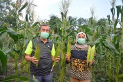 Gubernur Riau dan Istri Bagikan Hasil Panen ke Panti Asuhan, Pesantren dan Masyarakat