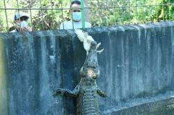 BBKSDA Riau Siap Sumbangkan Sejumlah Hewan